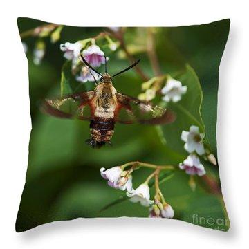 Hummingbird Clearwing... Throw Pillow by Nina Stavlund