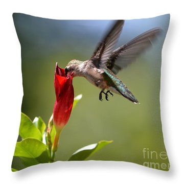 Hummingbird Dipping Throw Pillow by Debbie Green