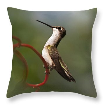 Hummingbird Eloquent Appeal Throw Pillow by Christina Rollo
