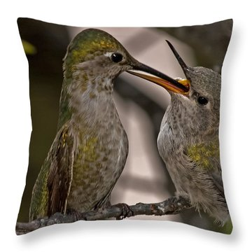Hummingbird Feeding Baby Throw Pillow by Lee Kirchhevel
