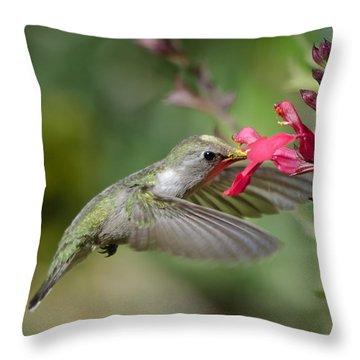 Hummingbird Heaven  Throw Pillow by Saija  Lehtonen