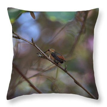 Throw Pillow featuring the photograph Hummingbird by Kevin Ashley