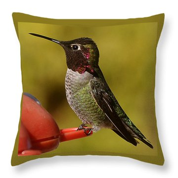 Hummingbird Male Allan Throw Pillow