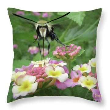 Throw Pillow featuring the photograph Hummingbird Moth by Donna Brown