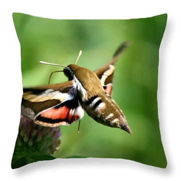 Hummingbird Moth From Behind Throw Pillow by Neal Eslinger