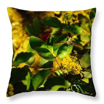 Hummingbird Moth Throw Pillow by Jeff Swan
