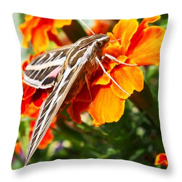 Hummingbird Moth On A Marigold Flower Throw Pillow