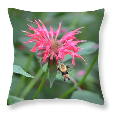 Hummingbird Moth Throw Pillow by Richard Bryce and Family