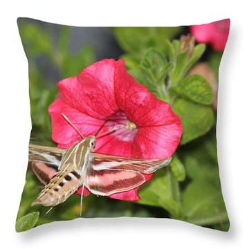 Hummingbird Moth Throw Pillow by Tiffany Erdman