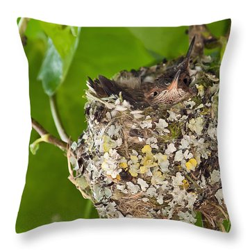 Hummingbird Nest 2 Throw Pillow