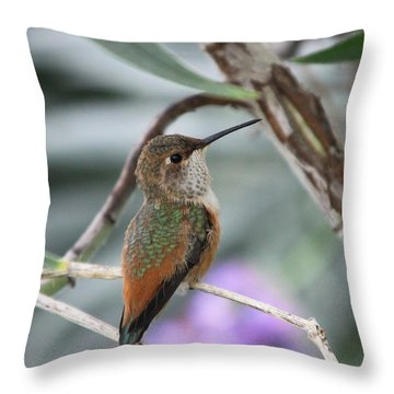 Hummingbird On A Branch Throw Pillow