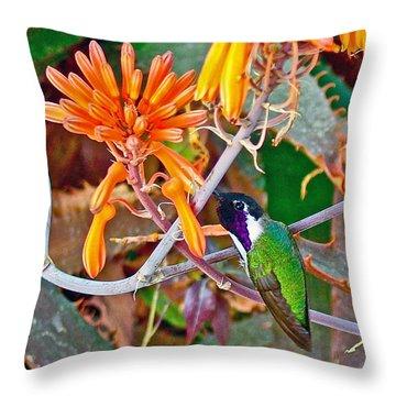 Hummingbird On Aloe In Living Desert In Palm Desert-california Throw Pillow