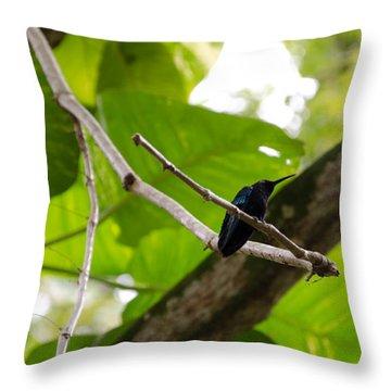 Hummingbird Out On A Limb Throw Pillow