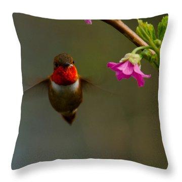 Hummingbird Throw Pillow by Tikvah's Hope