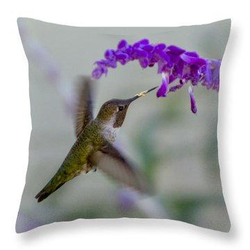 Hummingbird Series 01 Throw Pillow