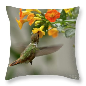 Hummingbird Sips Nectar Throw Pillow