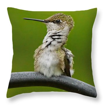 Hummingbird Stretching  Throw Pillow by Alan Hutchins
