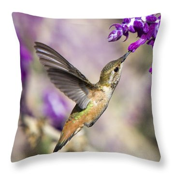 Hummingbird Collecting Nectar Throw Pillow by David Millenheft