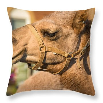 Hump Day Dreaming Throw Pillow