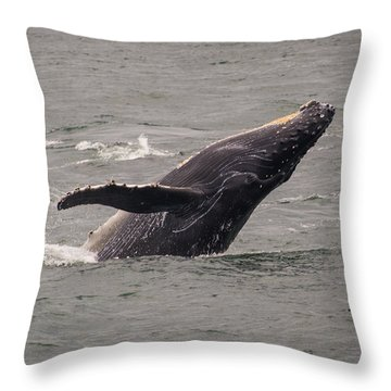 Throw Pillow featuring the photograph Humpback Whale Breaching by Janis Knight