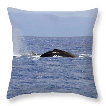 Humpback Pair Throw Pillow by Mike  Dawson