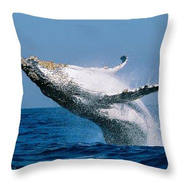 Humpback Whale Megaptera Novaeangliae Throw Pillow