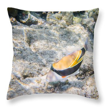 Humuhumunukunukuapua'a Throw Pillow by Denise Bird