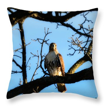 Throw Pillow featuring the photograph Hungry by Ally  White