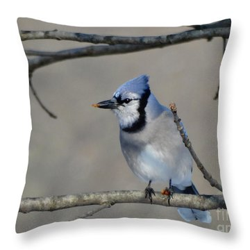 Hungry Blue Jay Throw Pillow