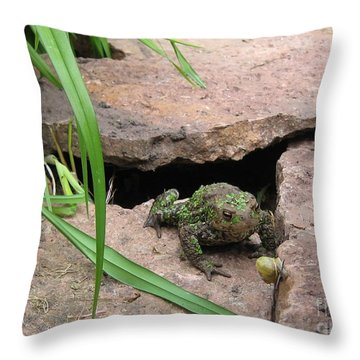 Throw Pillow featuring the photograph Hungry Frog by Susanne Baumann