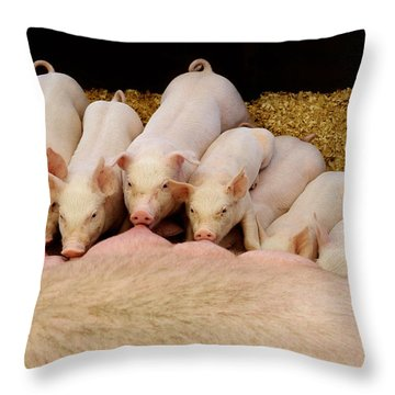 Hungry Little Piglets Throw Pillow