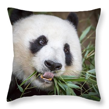 Hungry Panda Throw Pillow
