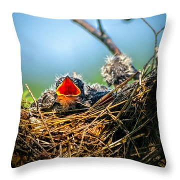 Hungry Tree Swallow Fledgling In Nest Throw Pillow
