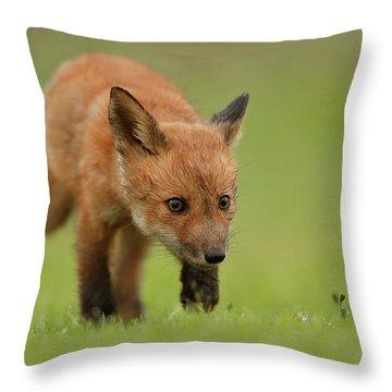 Explorer Throw Pillows