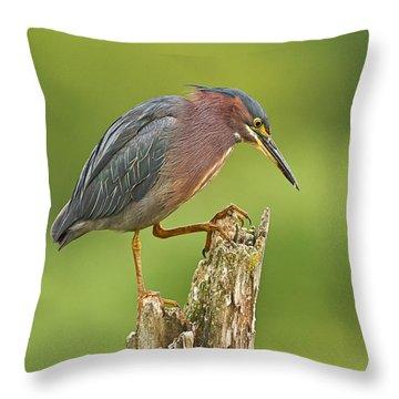 Hunting Green Heron Throw Pillow