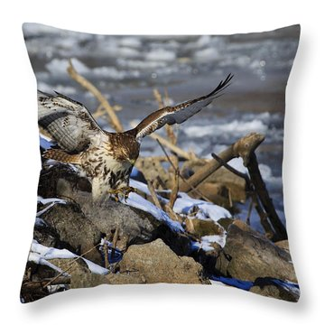 Throw Pillow featuring the photograph Hunting Red-tail Hawk by Gary Hall