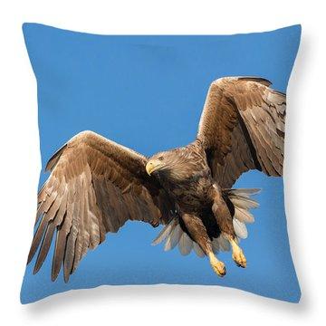 Hunting Sea Eagle Throw Pillow
