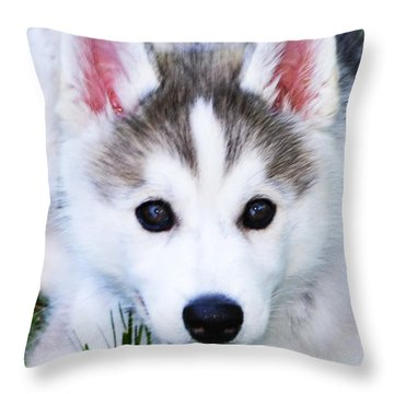 Huskie Throw Pillows