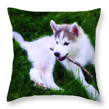 Huskie Pup Playing Fetch Throw Pillow by Bill Cannon