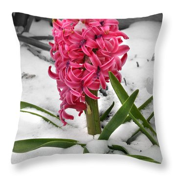Hyacinth In The Snow Throw Pillow by E B Schmidt