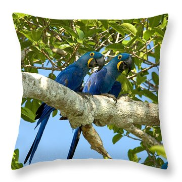 Hyacinth Macaws Brazil Throw Pillow by Gregory G Dimijian MD