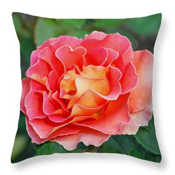 Hybrid Tea Rose  Throw Pillow by Lisa Phillips