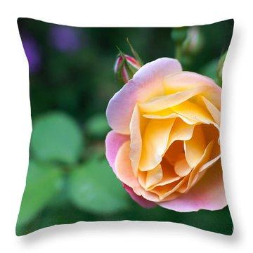 Throw Pillow featuring the photograph Hybrid Tea Rose by Matt Malloy