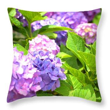 Throw Pillow featuring the photograph Hydrangeas In The Sun by Rachel Mirror