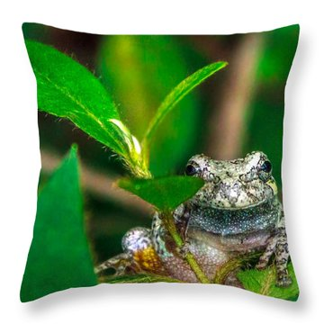Throw Pillow featuring the photograph Hyla Versicolor by Rob Sellers