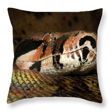 Boa Constrictor Throw Pillows