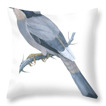 Hypocoly Throw Pillow by Anonymous