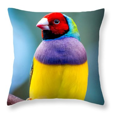 I Am So Pretty Oh So Pretty Throw Pillow