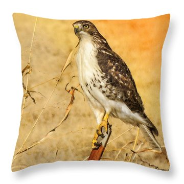 I Can See Clearly Throw Pillow by Betty LaRue