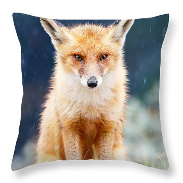 I Can't Stand The Rain  Fox In A Rain Shower Throw Pillow